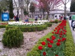 Tulips abloom all over city